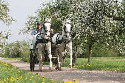 Fahren auf dem Gestüt Kladruby in Tschechien
