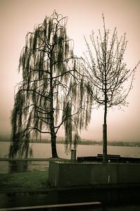 trees on a rainy day.