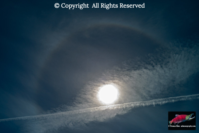 Contrails, sirruostratus clouds and a 22° halo