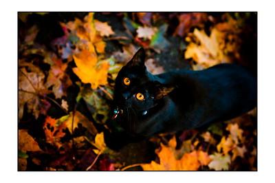 Coco the Hallowe'en Cat