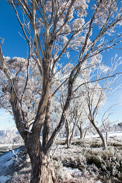 Hoar Frost on the Cabramurra Rd