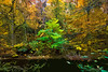 Valley Green - Fall Colors by the Wissahickon