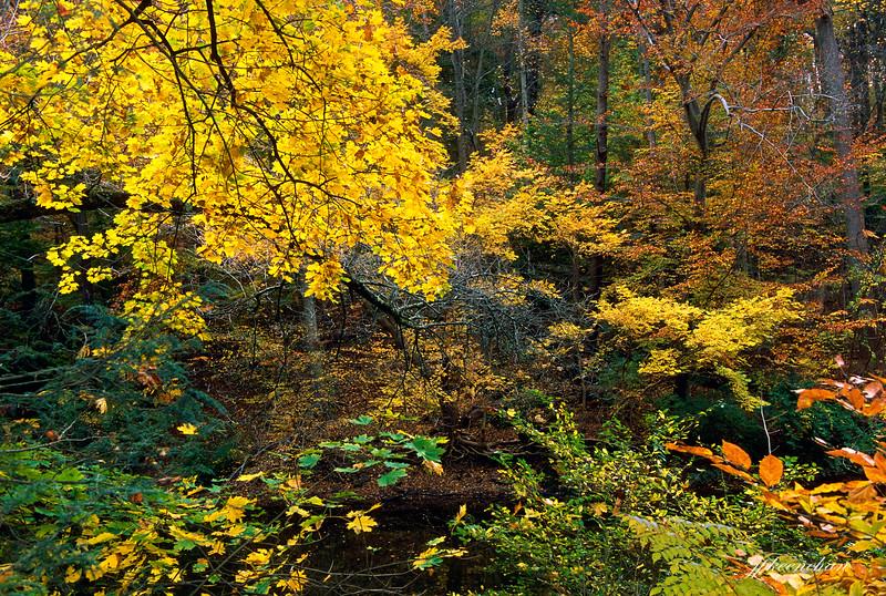 Valley Green - the Wissahickon Valley, Philadelphia Pa