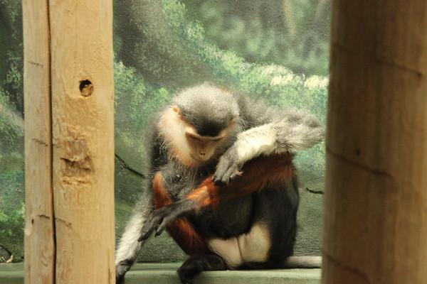 Philadelphia Zoo 06-10-2017