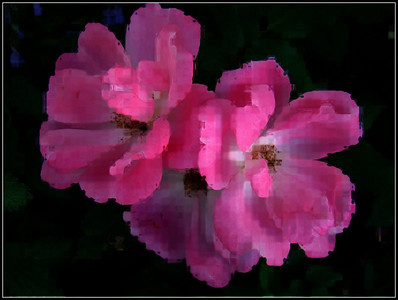 pink roses creation