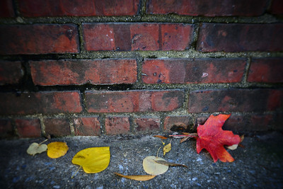 Fall Leaves---Philadelphia, PA