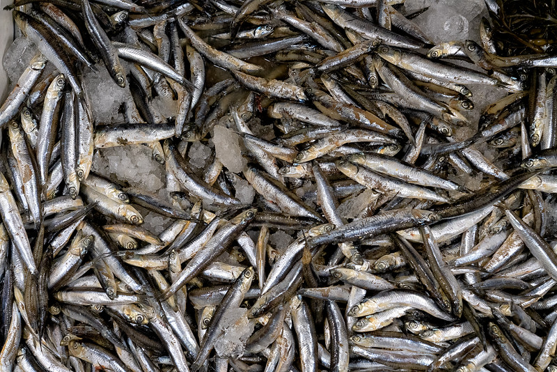On ice at the Philadelphia Fish Market: smelts, soon to be one of the courses in the traditional 7 fish Italian Christmas Eve dinner.
