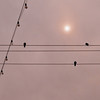 Wires, bulbs and birds