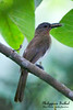 Philippine Birds : 82 galleries with 1968 photos