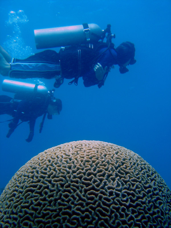 Divers and brain coral at Sunken Island, near Malapascua, Philippines