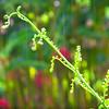 Young fern in the rain - Sagada, Mt. Province