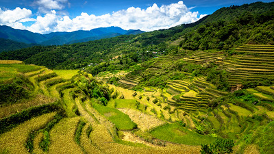 Maligcong Rice Terraces, Mt. Province