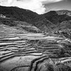 Maligcong Rice Terraces in Black and White