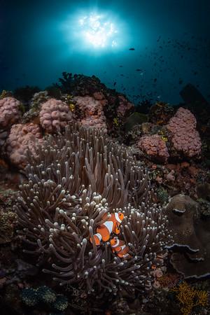 Nemo's Neighborhood