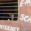 E-Mail, Scan, Internet, Dog
