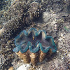Snorkeling Camiguin Island Sunken Cemetery