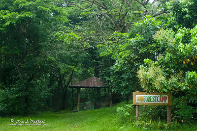 Tanay Rainforest Camp