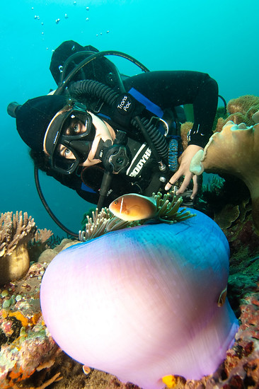 Diver and clownfish, Apo Island Philippines