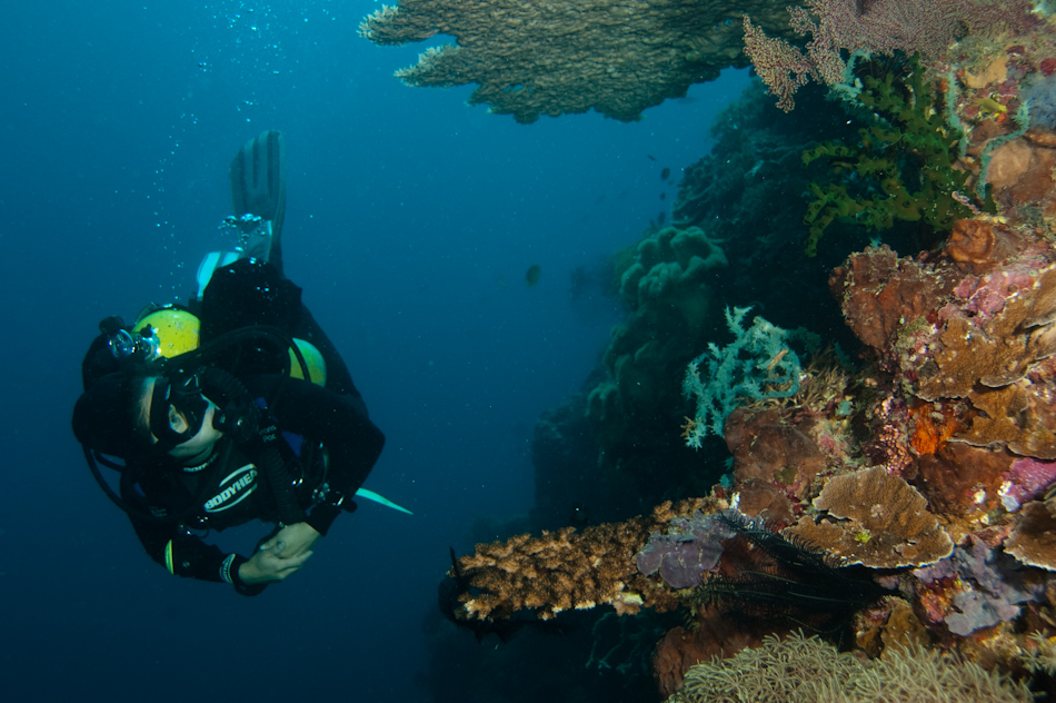Diver and coral, Apo Island Philippines