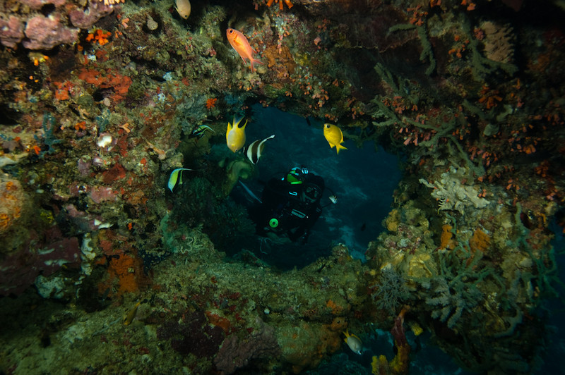 Diver looks through a hole in the coral, Apo Island Philippines