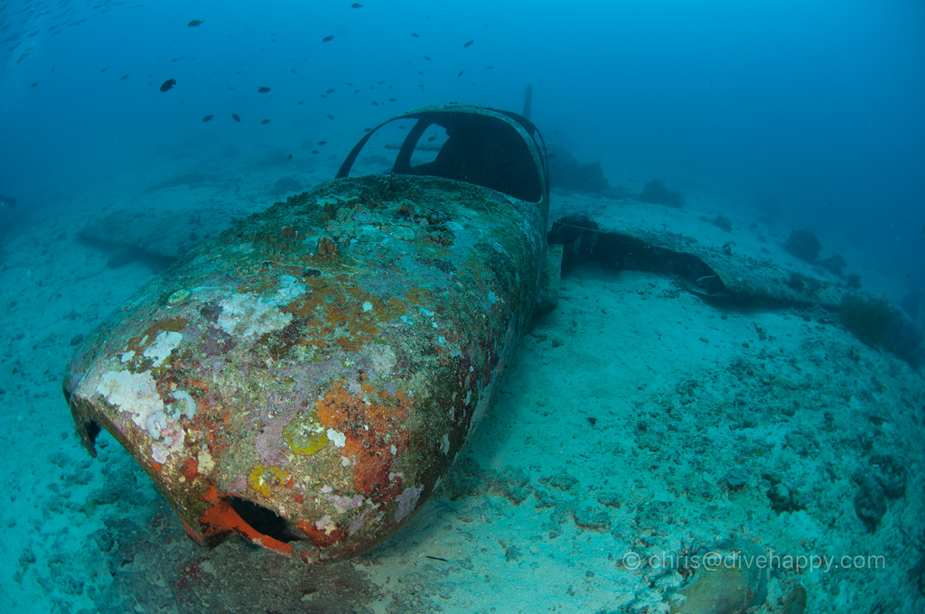 Cessna Airplane Wreck, Ronda Bay, Moalboal