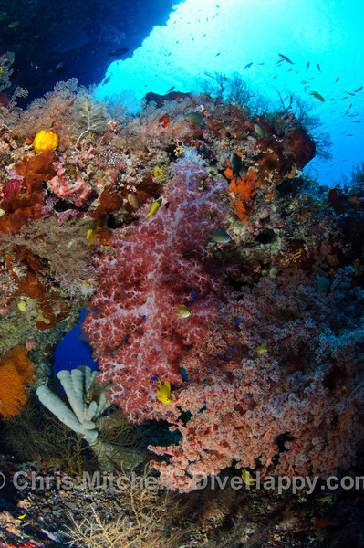 Soft corals on a natural arch, Calusa, Philippines