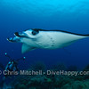 Manta Ray and photographer, Tubbataha Reef, Philippines