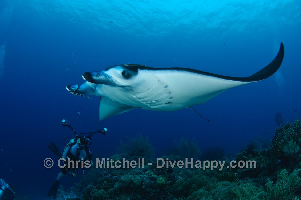 Manta Ray and photographer, Tubbataha Reef, Philippines