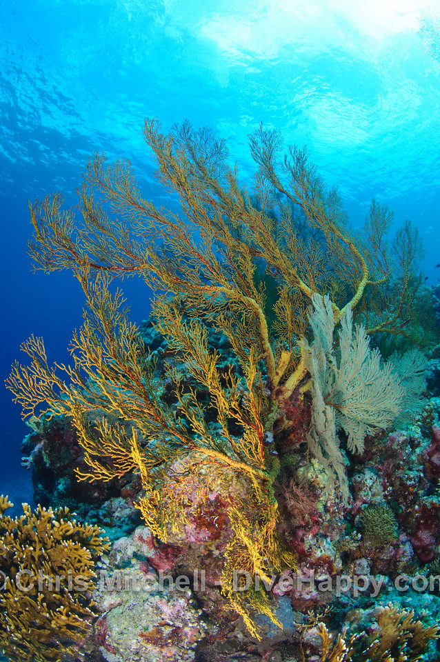 Tubbataha Reef, Calusa and Cagayancillo, Philippines