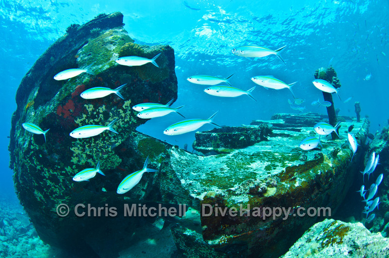Fish at Malaya Wreck,  Tubbataha Reef, Philippines