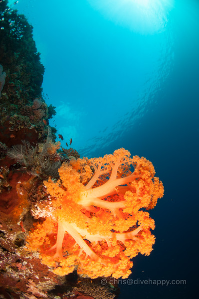 Soft coral and sky circle, Tubbataha Reef, Philippines