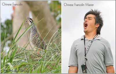 Chinese Francolin and it's Master ;-P