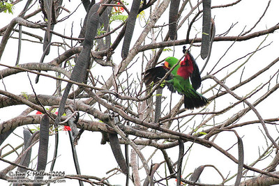 Eclectic Parrot