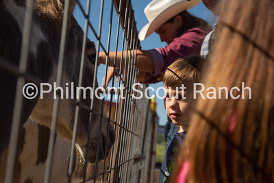 A PTC participant locks eyes with a burro for the first time at the Philmont Training Center in Cimarron, New Mexico on Thursday, July 25, 2019.