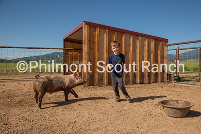 A PTC participant runs around the PTC pen with a pig at the Philmont Training Center in Cimarron, New Mexico on Thursday, July 25, 2019.