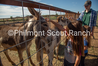 A PTC partcipant pets a burro at the Philmont Training Center in Cimarron, New Mexico on Thursday, July 25, 2019.