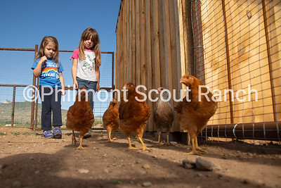 Two PTC participants puzzle at the chickens at the Philmont Training Center in Cimarron, New Mexico on Thursday, July 25, 2019
