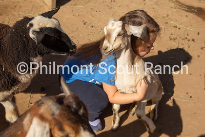 A PTC participant hugs a goat at the Philmont Training Center in Cimarron, New Mexico on Thursday, July 25, 2019.