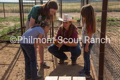 Jaclyn Christianson shows two PTC participants how to hold a chicken on Thursday, July 25, 2019 at the Philmont Training Center in Cimarron, New Mexico.