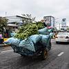 Farmer transporting bananas