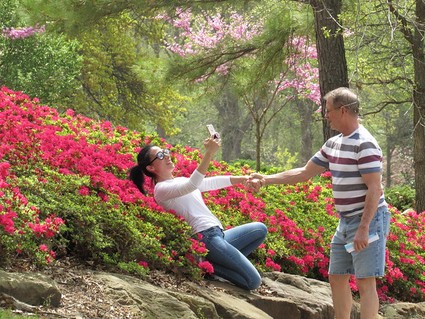 CATHY SPAULDING/Muskogee Phoenix<br /> Abir Walker of Tulsa holds Rick Walker's hand while leaning back to get a selfie in one of Honor Heights Park's blooming azalea beds Wednesday. Some of Honor Heights Park's famed azalea beds are beginning to show color, others could pop up soon. Muskogee Parks and Recreation Director Mark Wilkerson said 85-degree temperatures are rapidly bringing the azaleas to bloom. He expects a larger bloom this weekend and the peak bloom on Easter weekend. He said tulips, dogwoods and other plants also are in full bloom.