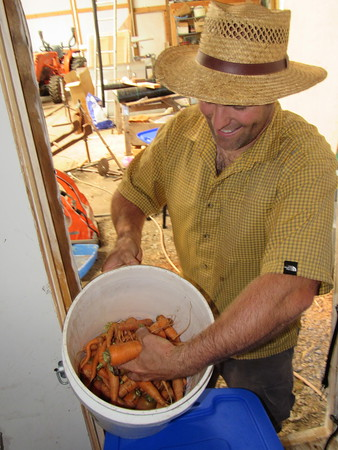 Staff photo by Cathy Spaulding<br /> Peace of Prairie Organic Farm co-owner Andy Herringshaw has an early crop of carrots ready for Saturday's opening of Muskogee Farmers Market. A mild winter has resulted in a large yield of early produce this year.