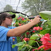 Staff photo by Cathy Spaulding<br /> Sophia Akuna of Beggs attaches a tag on a hanging plant to be sold at Connors State College Spring Plant sale. The sale runs Tuesday through Saturday.
