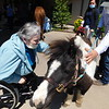 KENTON BROOKS/Muskogee Phoenix<br /> Pleasant Valley Health Care Center resident Judy Nelson pets Millie on Wednesday during the Pet Therapy Day at Pleasant Valley. Animals, which included a dog and two horses, were brought by Paula Seck and Kathy Gosselin of Complete Home Health and Complete Hospice for residents to touch and feed outside after being limited to their rooms because of the COVID-19 pandemic.