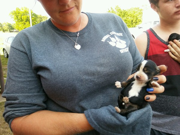 Staff photo by Wendy Burton<br /> Fort Gibson Animal Control Officer Brooke Brown checks on a 6-day-old puppy rescued from under a building Tuesday afternoon.