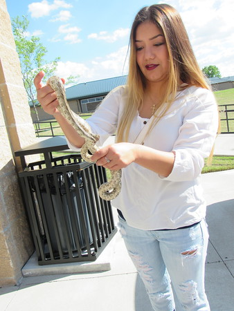 Staff photo by Cathy Spaulding<br /> Connors State College student Stephanie Duran handles a prairie<br /> king snake during an Earth Day celebration Friday afternoon at the<br /> Connors Port Campus.