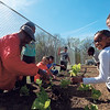 "D. E. SMOOT/Muskogee Phoenix<br /> Master Gardener Cedric Johnson, left, teaches Sarayne Leffall, 9, right, and other participants of the Dr. Martin Luther King Jr. Community Center's after-school program how to transplant vegetable seedlings at the facility's community garden. Whole Kids Foundation awarded the after-school program a $2,000 grant in support of the center's edible educational garden at the center. ""The community garden provides a wonderful educational opportunity for our students,"" said Laura Hazen, program manager at Neighbors Building Neighborhoods, which oversees King Center programs. ""This project helps them learn not only about gardening, but about healthy nutrition, math, science and sustainability."" Johnson, a retired educator serves, as the volunteer garden coordinator. Other students who took part planting the spring salad garden and other vegetables include Ciara Edwards, 9, Kourie Tate, 8, Eden Dennis, 10, Sharya Walker, 10, and Tucker Perkins, 12."