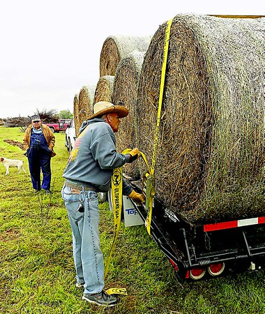 MIKE ELSWICK/Muskogee Phoenix<br /> Kelley Beard, of Skiatook, tightens up straps to secure a load of hay donated by David Stanley that is destined for fire ravaged areas in the western part of the state. In the background is Howard Gaither, who has helped coordinate Muskogee area efforts to connect locally donated hay with trucks, trailers and drivers in an effort to get the feed to livestock in need.