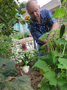 Keith Walters discovers a cucumber in his backyard garden. He also grows tomatoes, okra, green beans and onions.