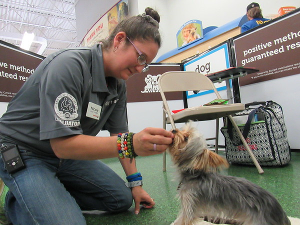 Nicole Six gives Hooty, a Yorkshire terrier, a treat during a training session.